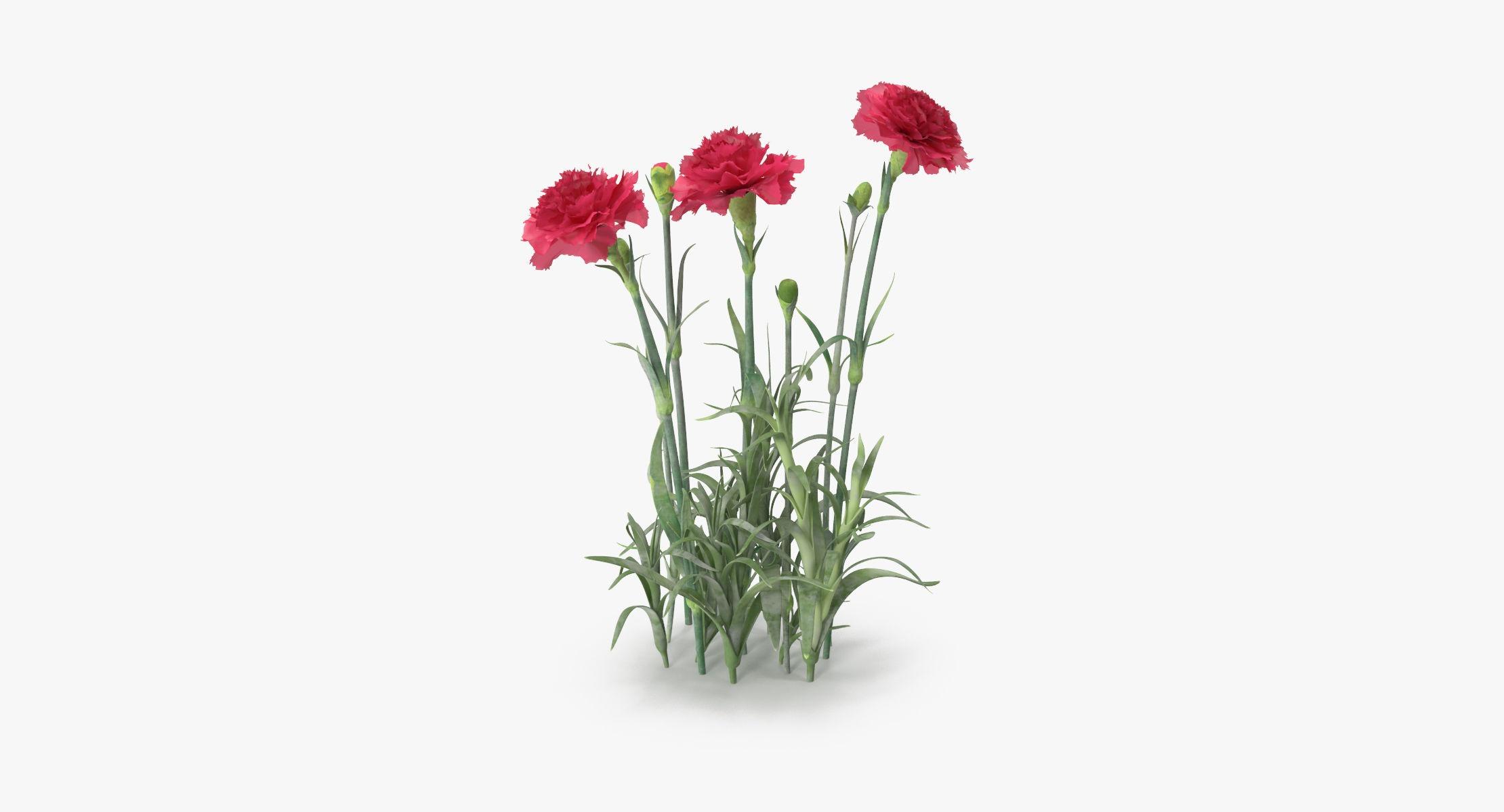 Carnation - Natural Group - reel 1