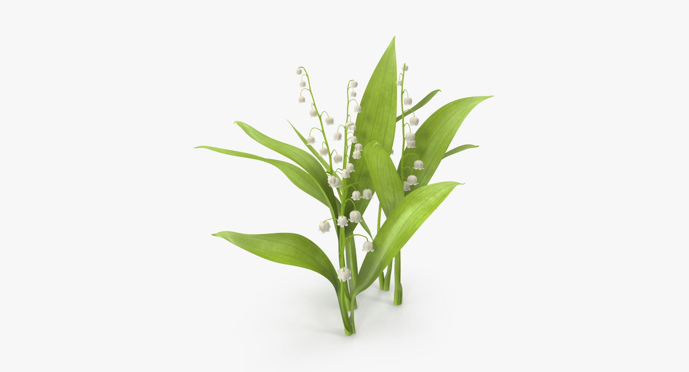 Lily of the Valley - Natural group - reel 1