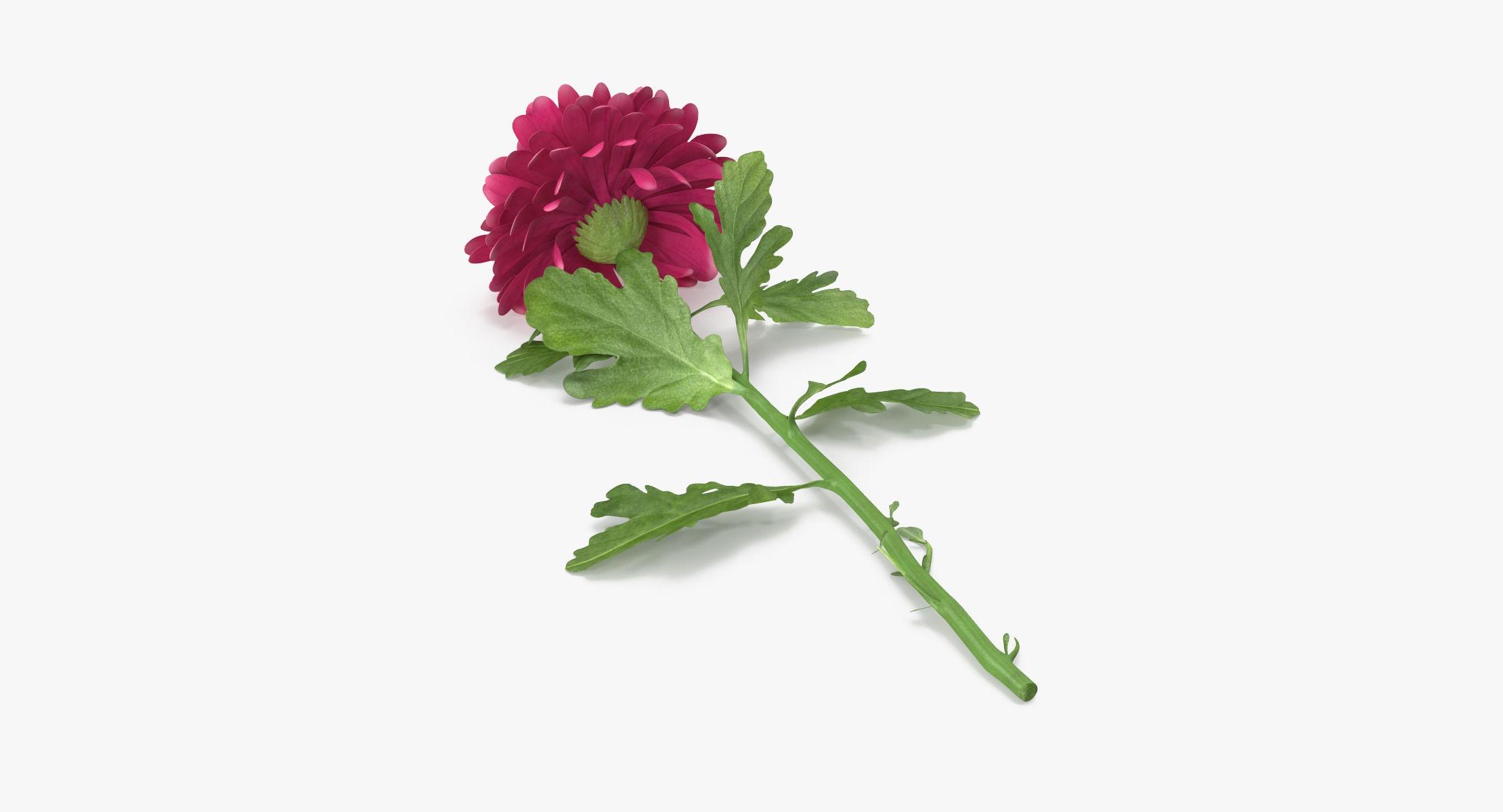 Chrysanthemum Pink - Single Laying - reel 1