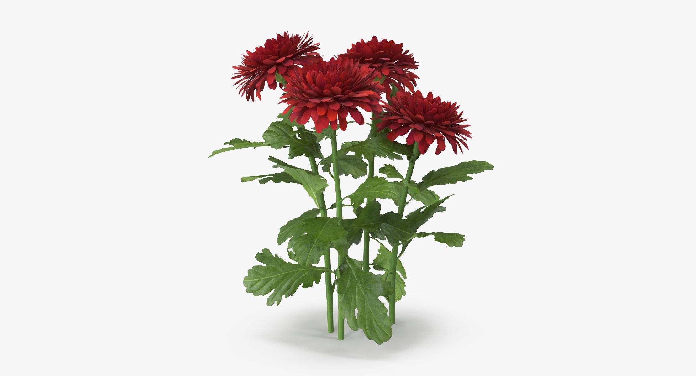 Chrysanthemum Red - Natural Group - reel 1