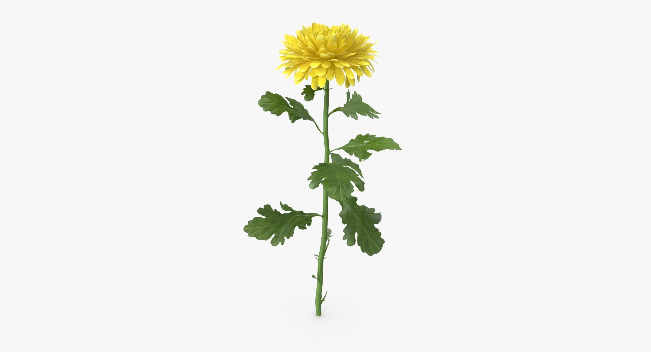 Chrysanthemum Yellow - Single Standing - reel 1