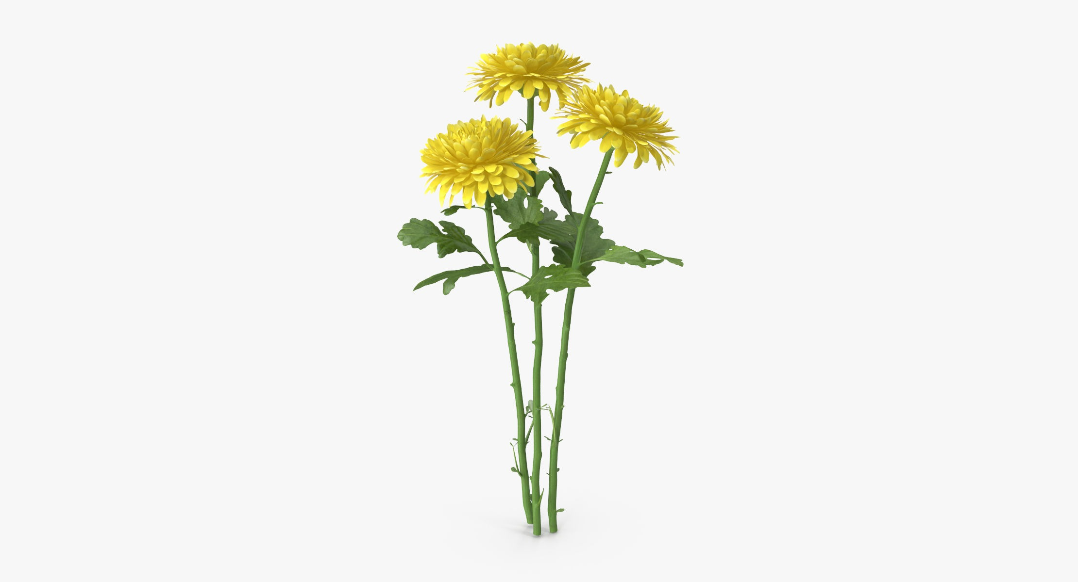 Chrysanthemum Yellow - Bouquet - reel 1
