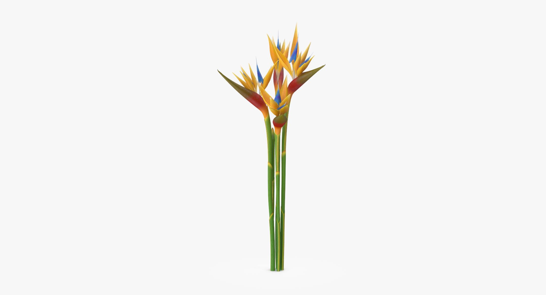 Bird of Paradise - Bouquet - reel 1