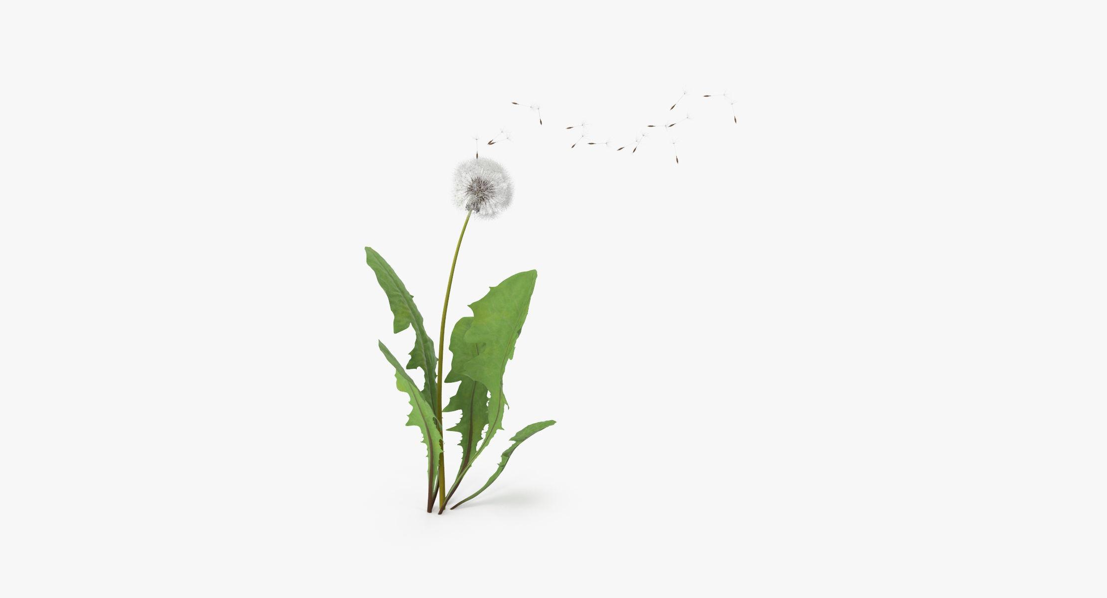 Dandelion Being Blown 01 - reel 1
