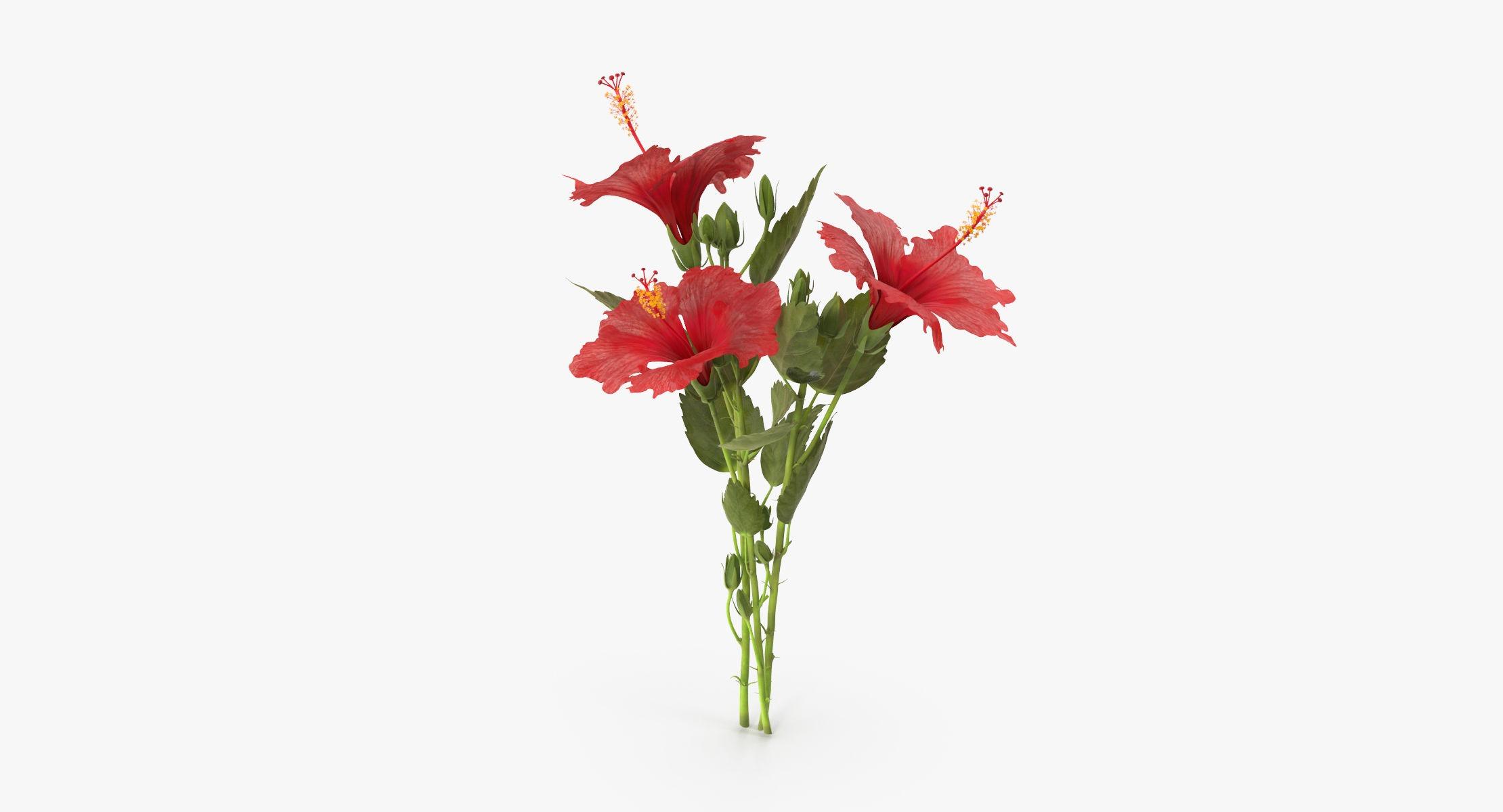 Hibiscus - Bouquet - reel 1