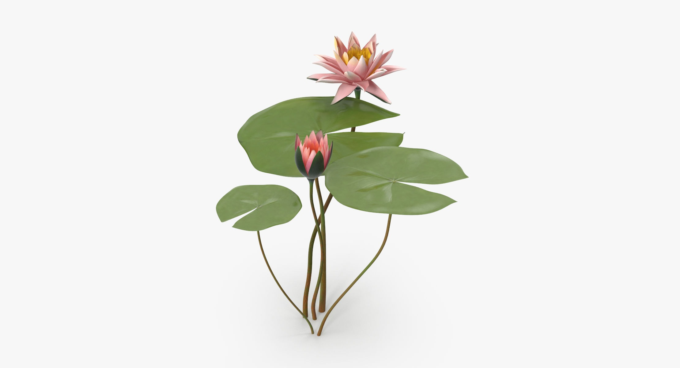 Water Lily 04 - reel 1