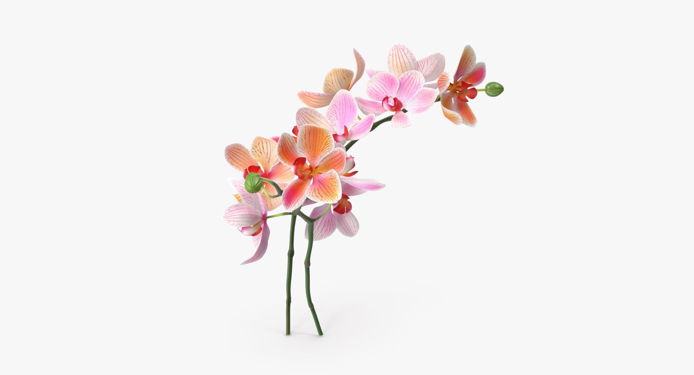 Orchid - Bouquet - reel 1