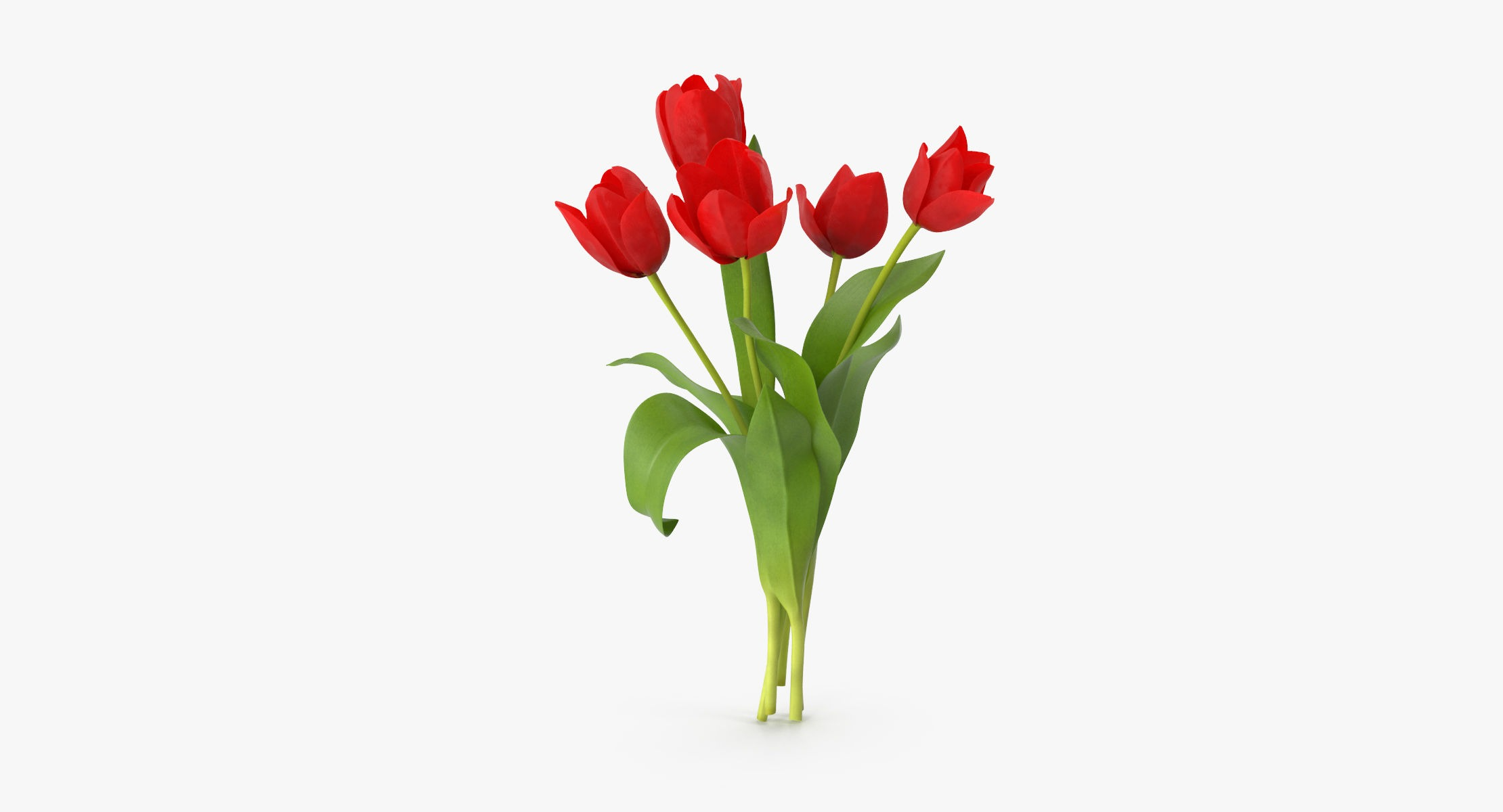 Tulips Red - Bouquet - reel 1