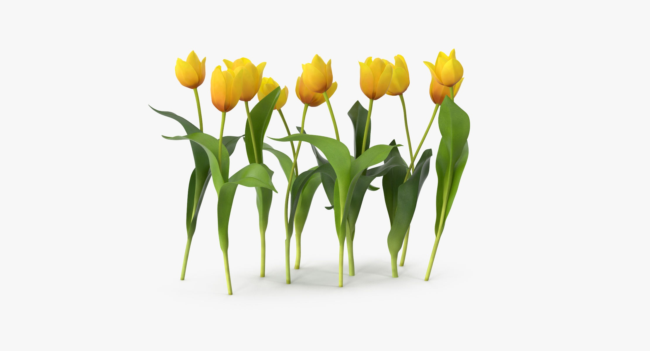 Tulips Yellow - Natural Group - reel 1