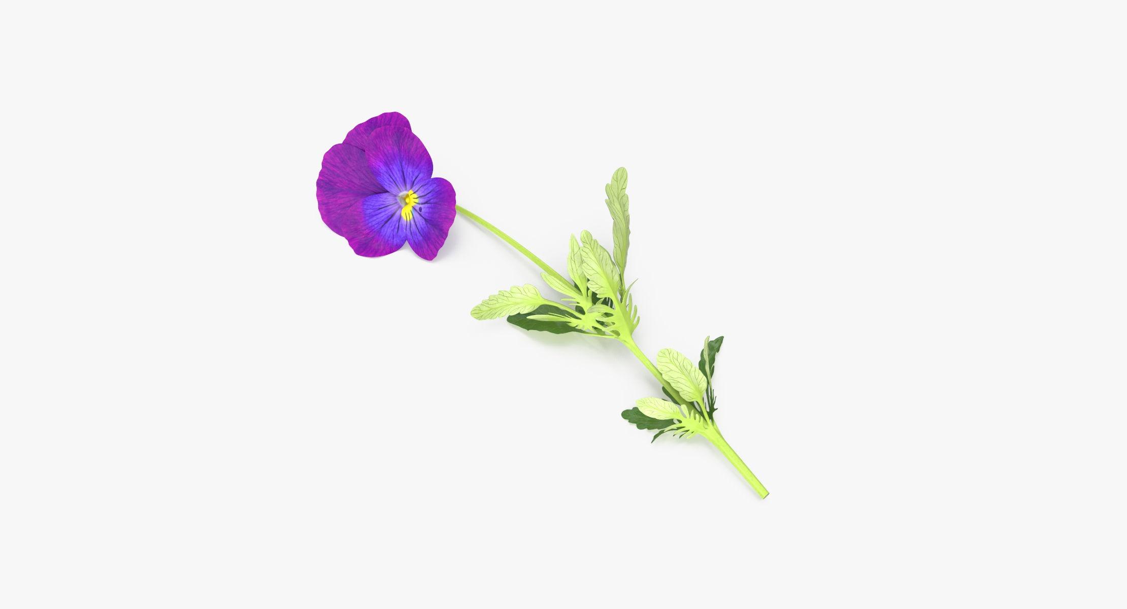 Pansies - Single Laying - reel 1