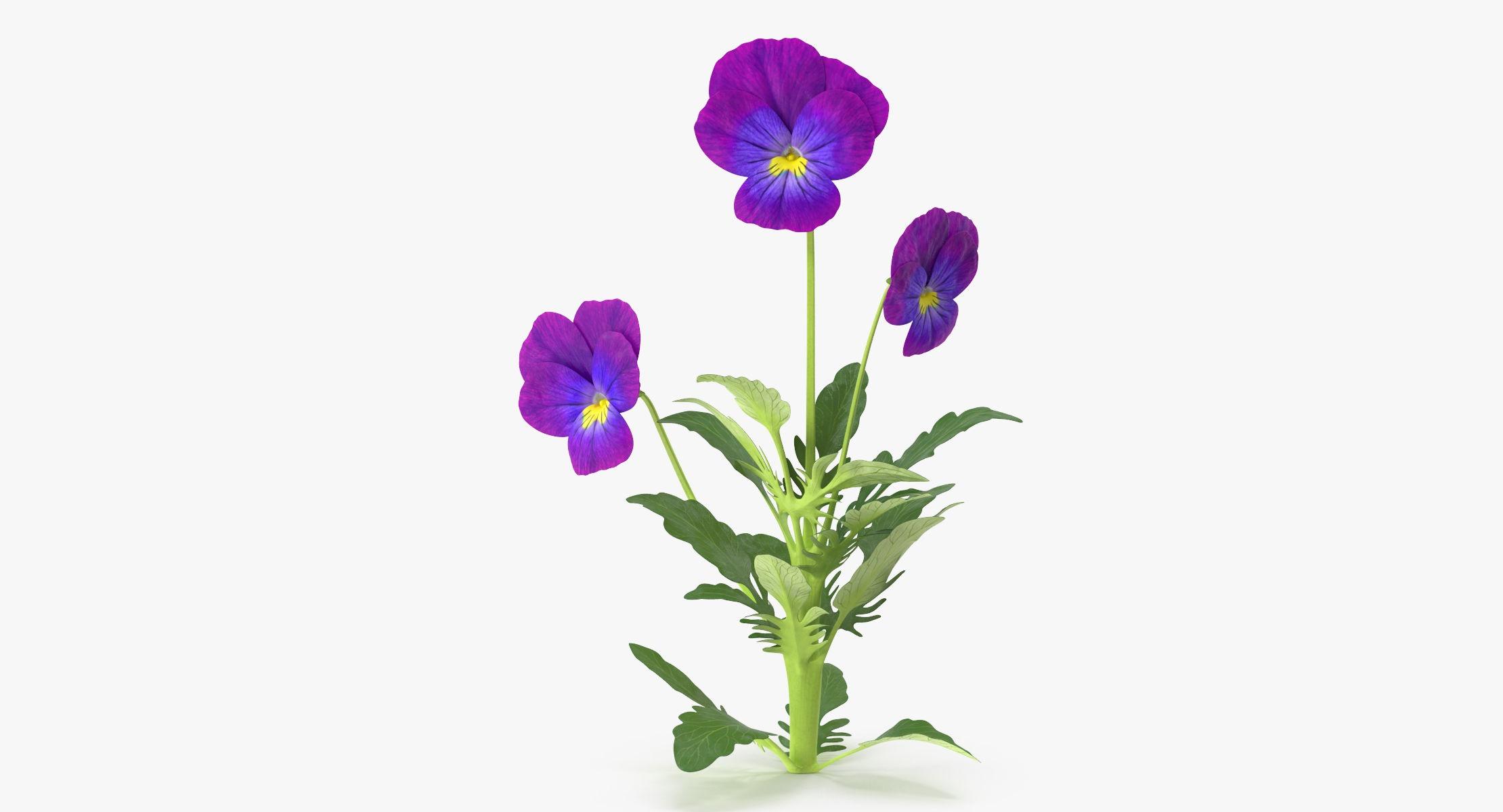 Pansies - Natural Group - reel 1