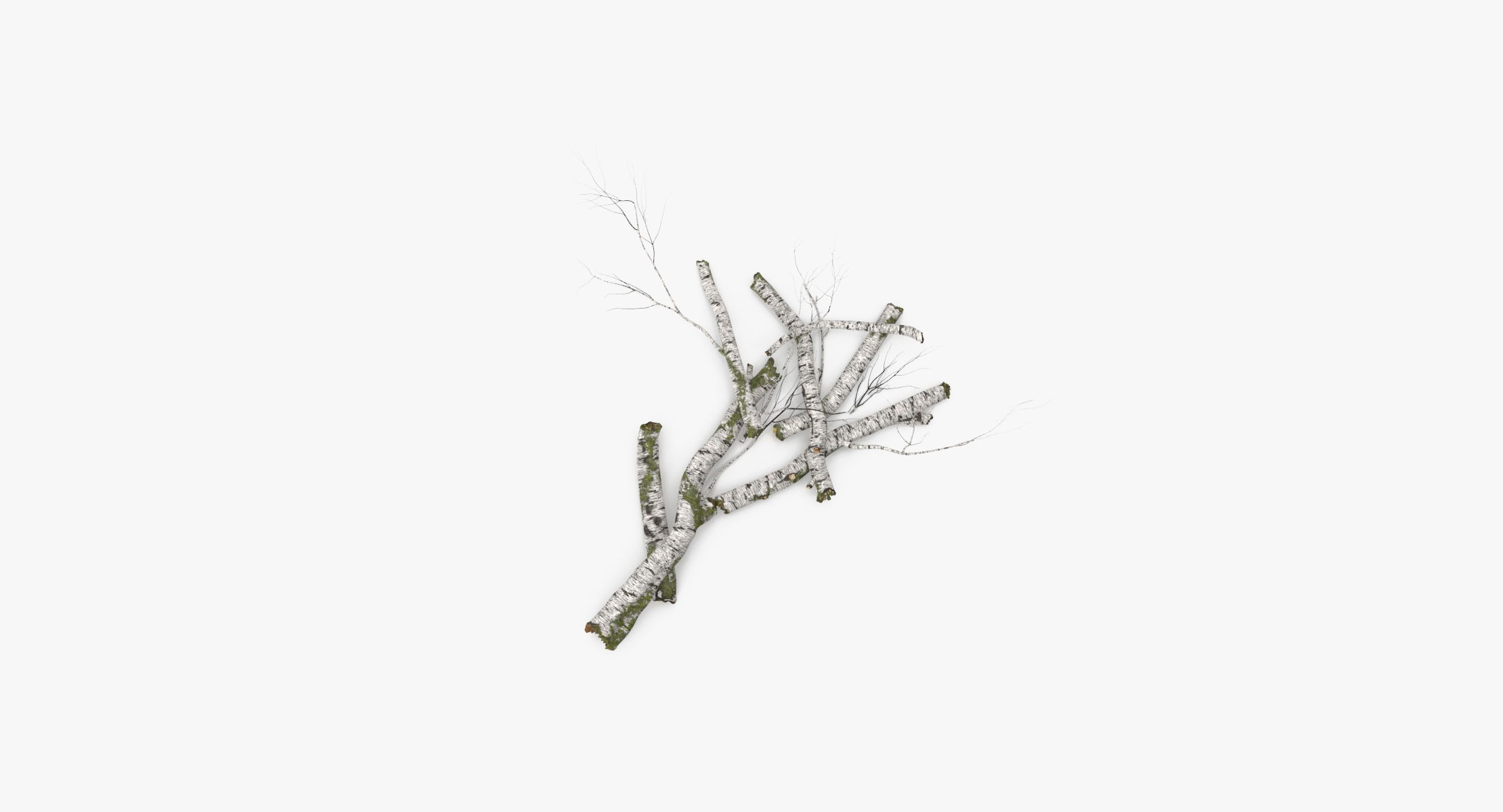 Fallen Log - Birch 03 - reel 1