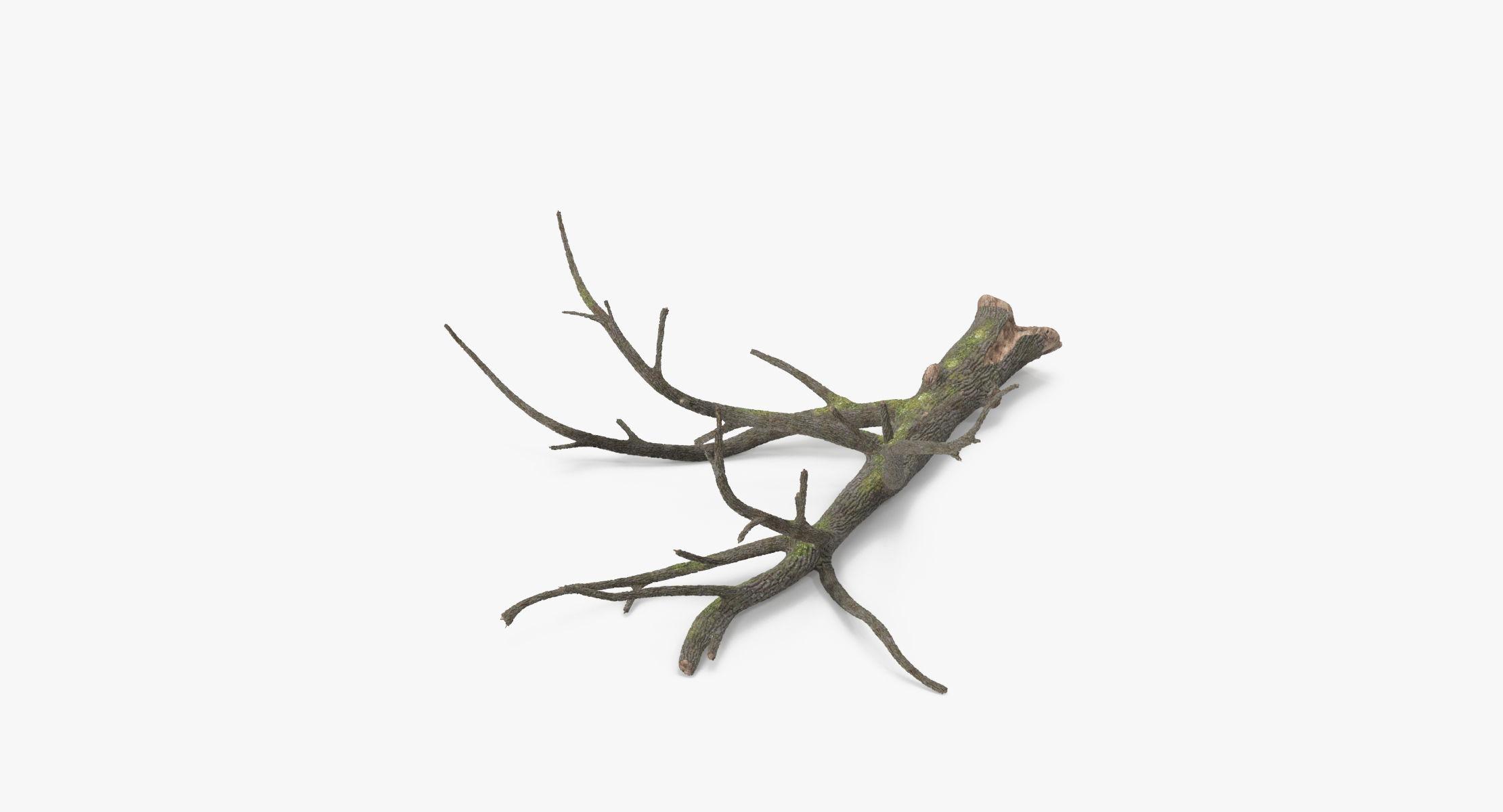 Fallen Log - Oak 01 - reel 1
