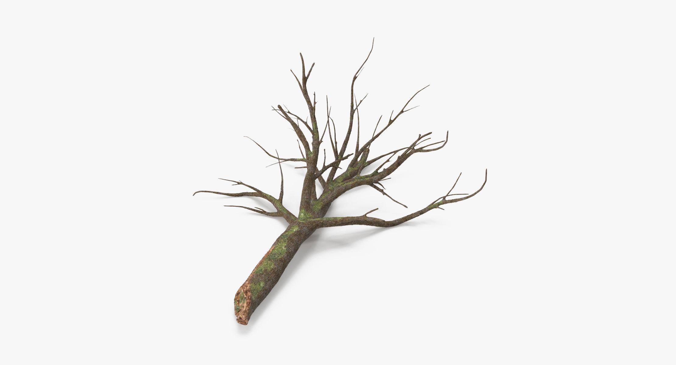 Fallen Log - Oak 02 - reel 1